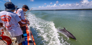 Area high school students take a break from conducting research tests on the Laguna Madre to watch a pod of dolphins frolicking in the wake of UTRGV's floating classroom, the Ridley. The students were part of UTRGV's recent Hands-On Marine Ecology Camp, offered by the Coastal Studies Laboratory of the UTRGV School of Earth, Environmental and Marine Sciences (SEEMS). It was the first time some of the students had seen dolphins in their natural environment. (UTRGV Photo by David Pike)