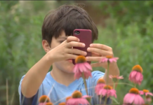 To view a video news report about the Pollinator BioBlitz